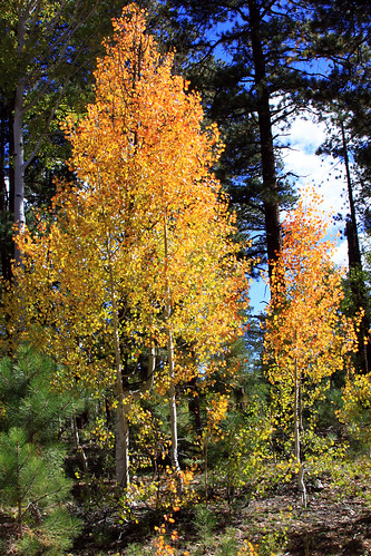 IMG_2726-1a by Kaibab National Forest