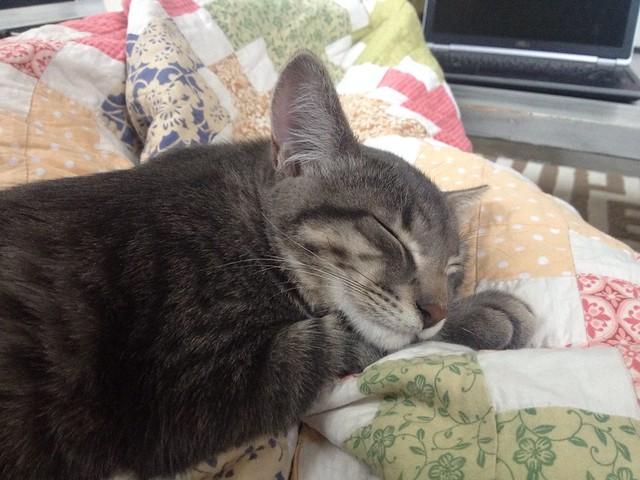 Marlow Sleeping