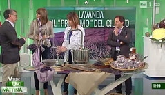 """La lavanda di Sanza"""" ospite"""" questa mattina su Rai 1 a """"Uno mattina"""":""""Il profumo della lavanda rischia di scomparire"""""""