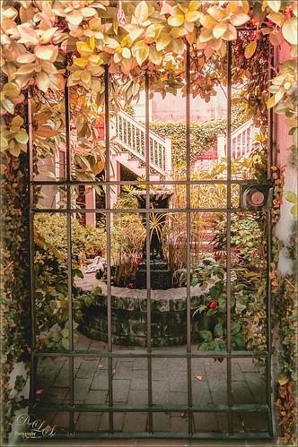 Image of a little garden in Savannah, Georgia