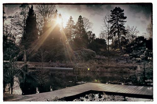 Dark Park - Waldsee