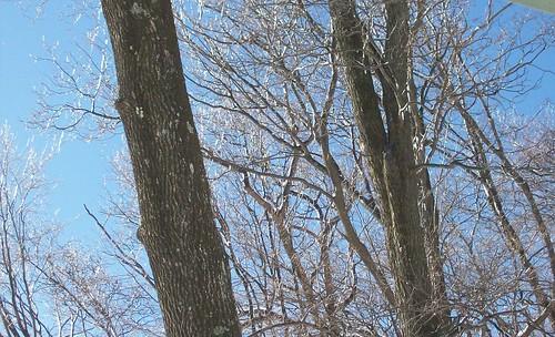 glittery trees 1