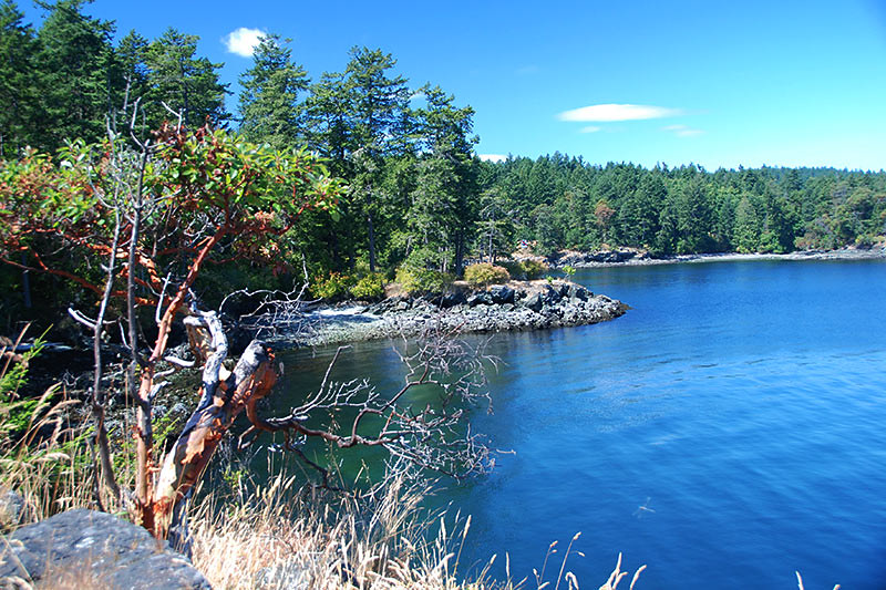 Coves and Pebbled Beaches in Ruckle Park, Saltspring Island, Gulf Islands National Park, British Columbia, Canada