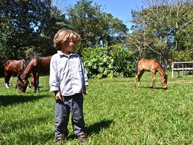 finca ixobel - horse eating
