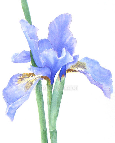watercolor-print-iris