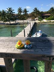 Ducks-473