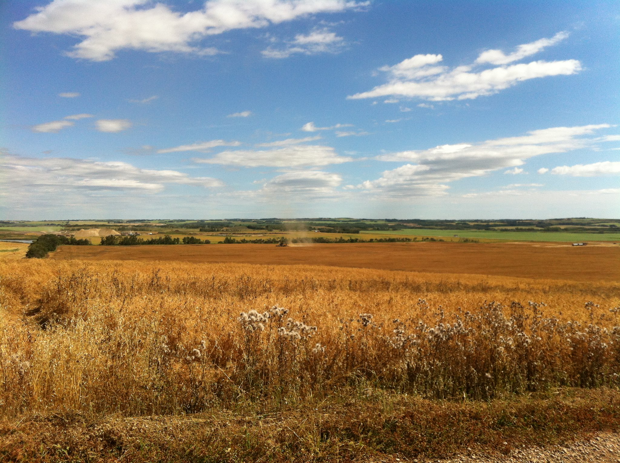 Prairies. Early harvest.