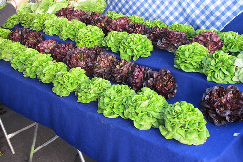 market lettuce at Hollywood Farmers Market