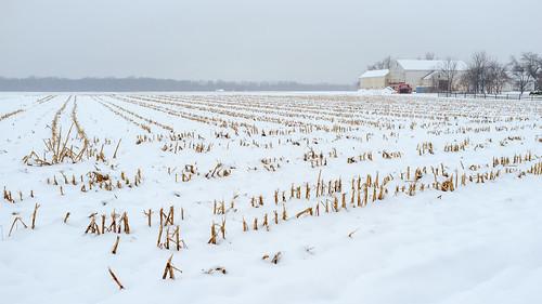 barn corn cornstubble crops farm landscape nj princeton rows snow winter newjersey unitedstates