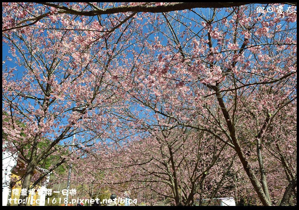 武陵農場賞櫻一日遊DSC_5751