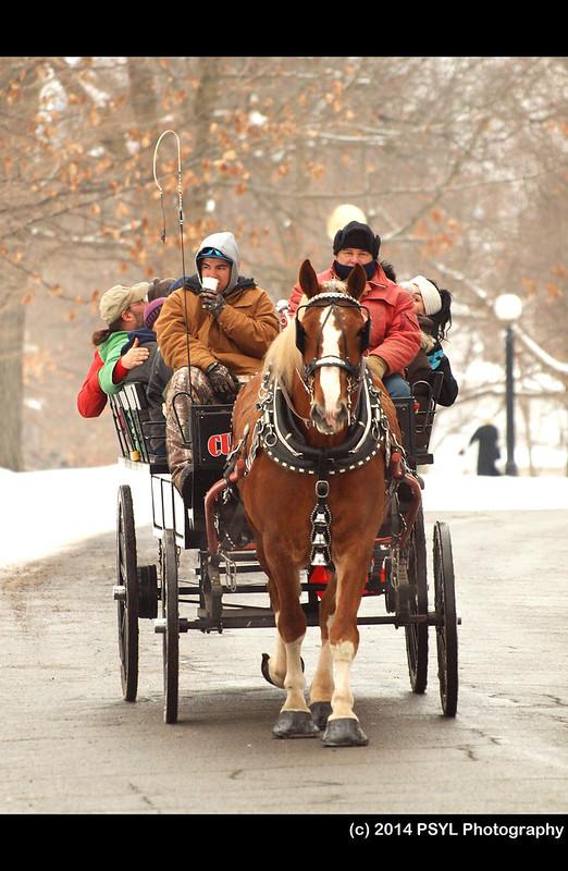 Horse-Drawn Wagon Ride