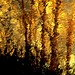 Reflet d'arbres...!!! by Denis Collette...!!!