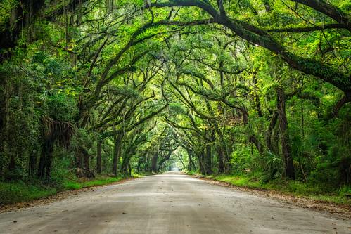 road trees green southcarolina charleston spanishmoss botanybay edistoisland botanybayroad visitsc discoversc