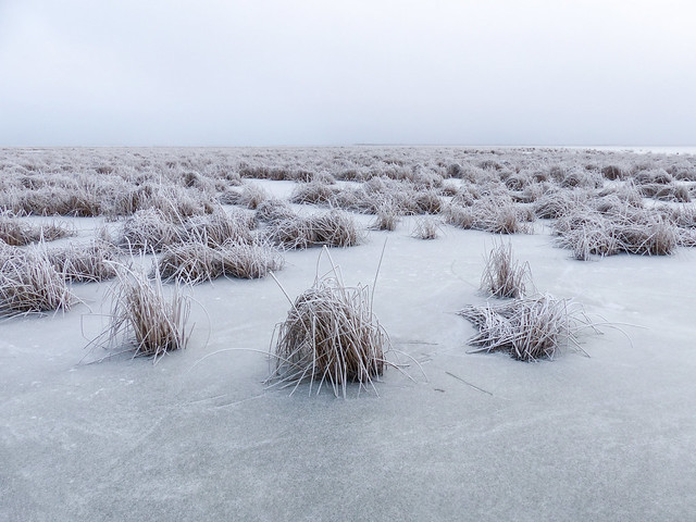 Cold, bleak and frosty