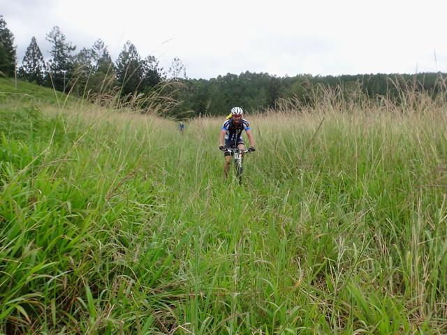 Fukawi Grass