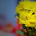 Yellow Flowers by Tony_nho