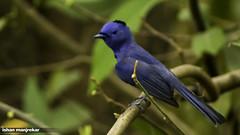 green jay(0.0), jay(0.0), animal(1.0), branch(1.0), nature(1.0), fauna(1.0), bluebird(1.0), beak(1.0), bird(1.0), wildlife(1.0),