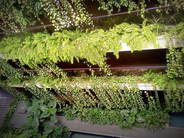 Jardines en las oficinas de STF group