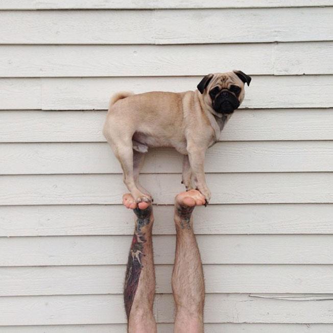 Meet-Norm-Dog-16