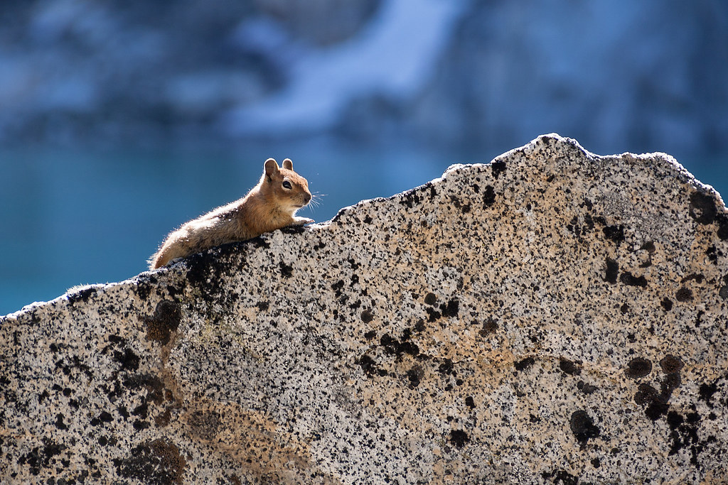 Draw me like one of your French chipmunks