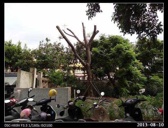 20130810_Tree