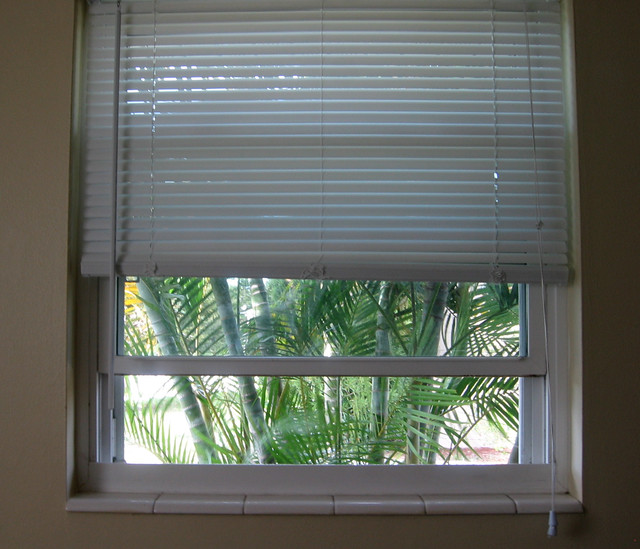 Window with palms
