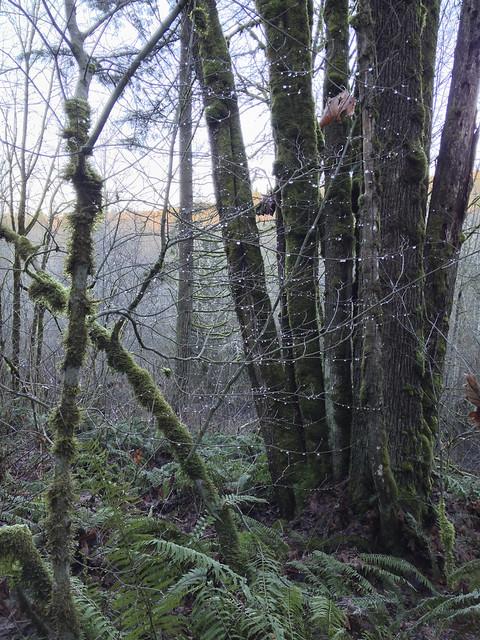 Winter in Northwest Mountains