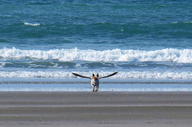 The perfectly timed dog with wings picture: