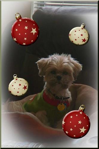 Bilbo-Favorite-Ornament