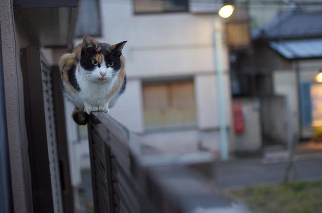 東京路地裏散歩 雑司ヶ谷 2013年12月16日
