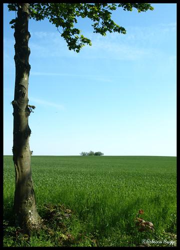 sky lund tree verde green field skåne sweden horizon schweden himmel vert ciel cielo árbol campo sverige grün 木 albero arbre 空 緑 baum horizont träd suecia champ horizonte acker åker orizzonte suède grön スウェーデン svezia 畑 horisont 地平線