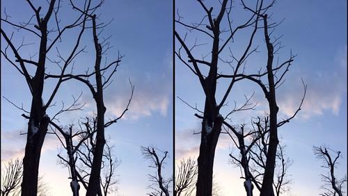 [Daily Cha cha S3-D] 冬の木立、交差法。