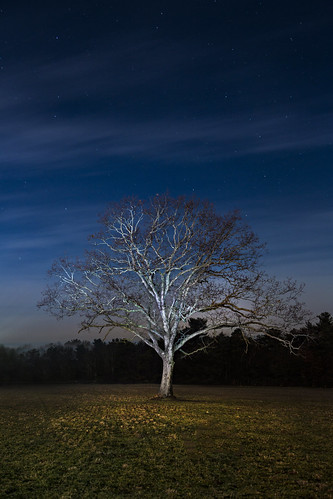 night tree by marion faria