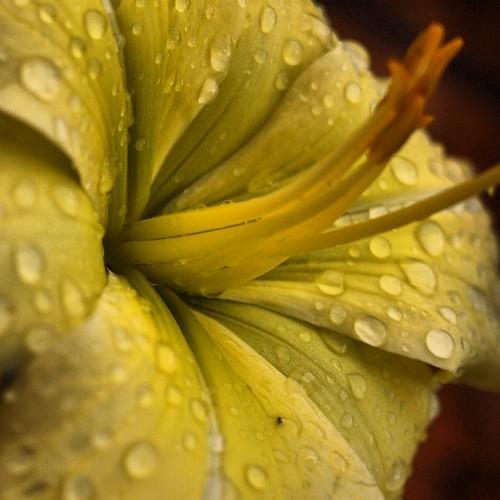 #macro #olympus #instaflowers #manizales #vacaciones2013