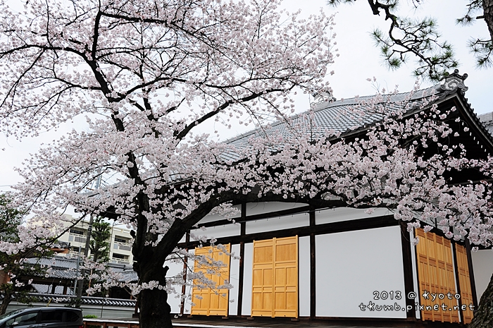 妙蓮寺 (5).jpg