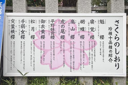 【写真】2014 桜 : 平野神社/2020-06-29/IMGP5552