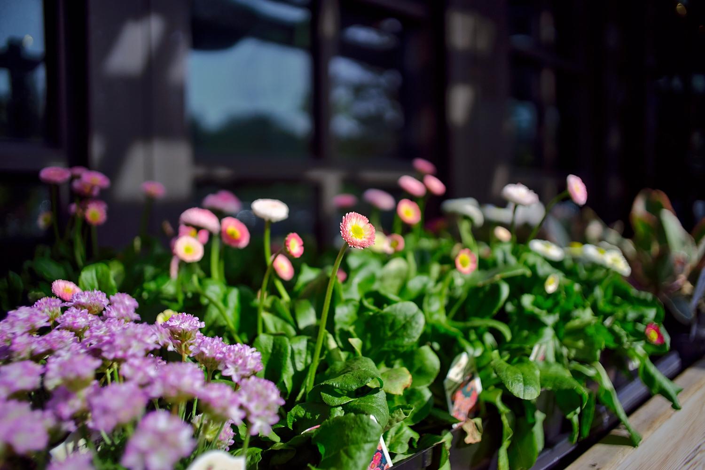 春天的街道 (四) - A7 + Leica Elmarit-R 28mm