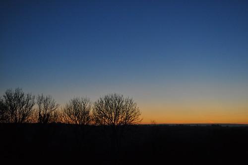 morning blue trees sky tree dawn indigo sihouette