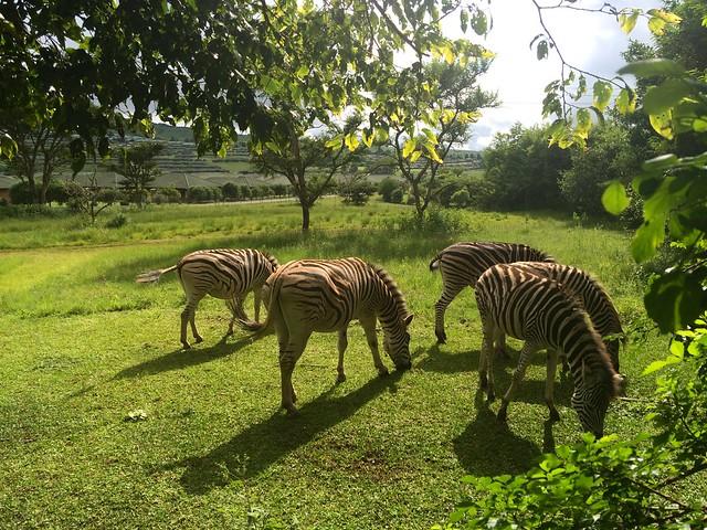 At Umgeni Nature Valley