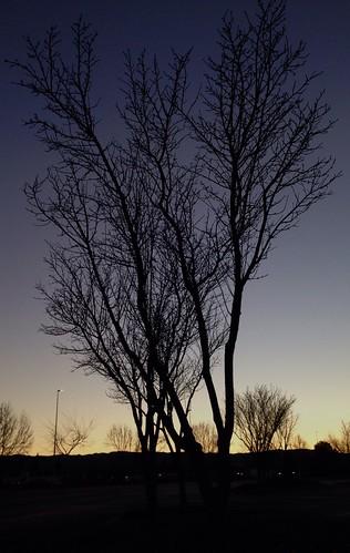 sunset tree silhouette dusk noleaves