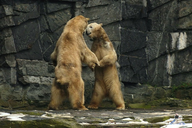 Tierpark Berlin 07.02.2015   209
