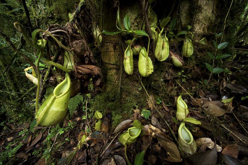 Carnivores et orchidées in situ  16358433982_befed0d94f_c