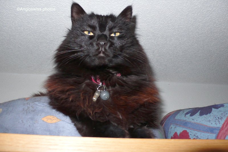 Nera on top of the wardrobe