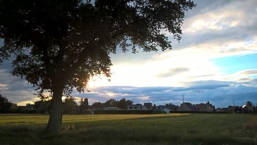 wood blue light sunset sky cloud sun plant color tree green nature field june juni skyline season landscape ma belgium belgie outdoor mado 2016
