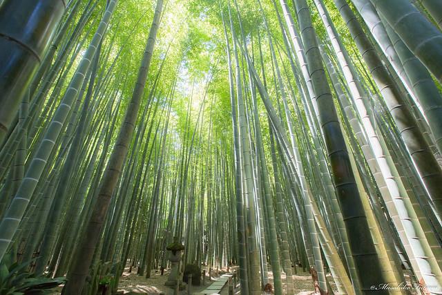 Hōkoku-ji Temple (Bamboo Temple)