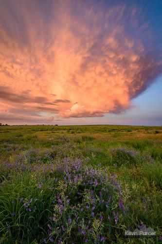 storm stormy thunderstorm june summer sky weather clouds nikond750 tokina1628mmf28 blue norfolk nebraska greatplains evening dusk sunset colorful orange pink prairie wildflowers purple base green grass