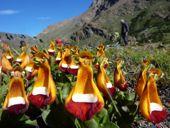 Frühsommer in Patagonien zu Füßen von Cerro Torre und Fitz Roy. Foto: Günther Härter.