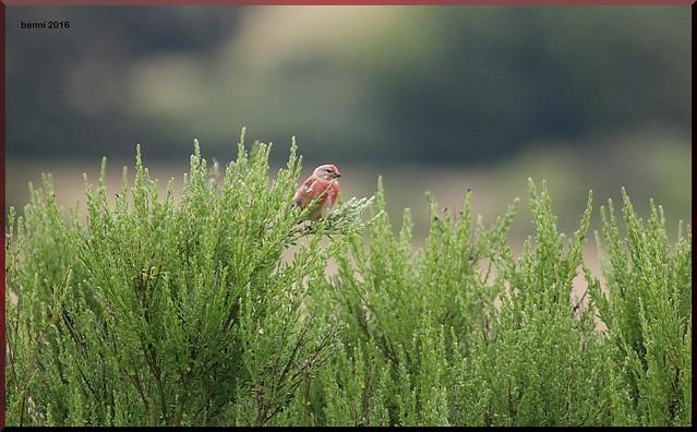 Vogel im Naionalpark Eifel, Canon EOS 70D, EF100-400mm f/4.5-5.6L IS USM