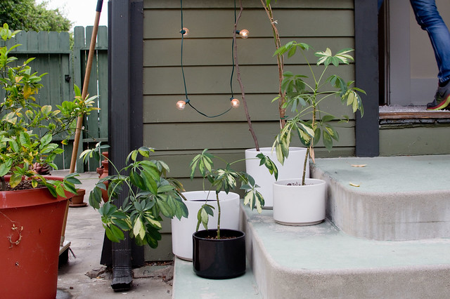 lights, potted plants