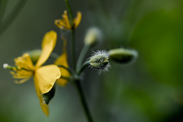 Blommor-20130531-1
